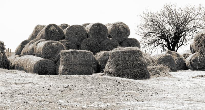 Winter on the farm in the Northwest, South Africa royalty free stock photos