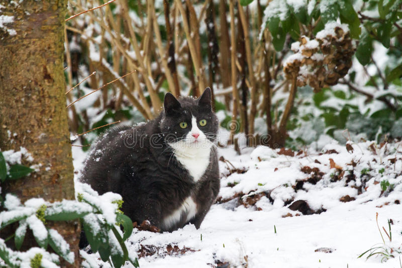 Winter fatty stock image