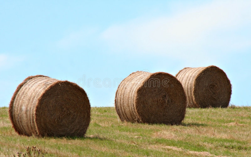 Download Winter Feed stock photo. Image of country, farm, bale, agriculture - 507056