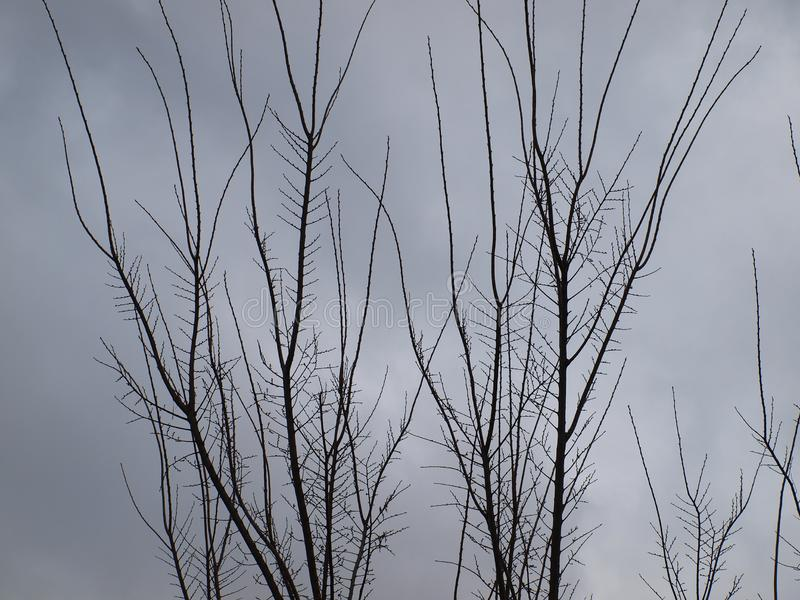 Desolately Barren Bleakness of Winter. Winter is only a few days old and the transformation from fall to winter visually is dramatic. These trees were covered in stock photo