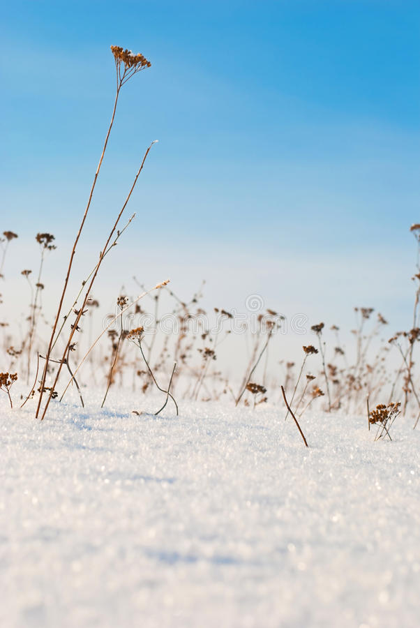Free Winter Field Stock Images - 17732854