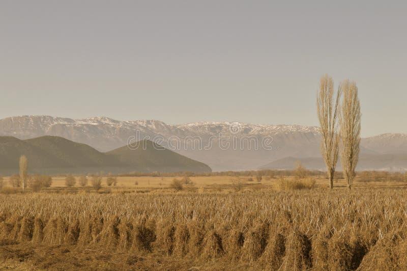 Winter fields by ioanna papanikolaou stock photos