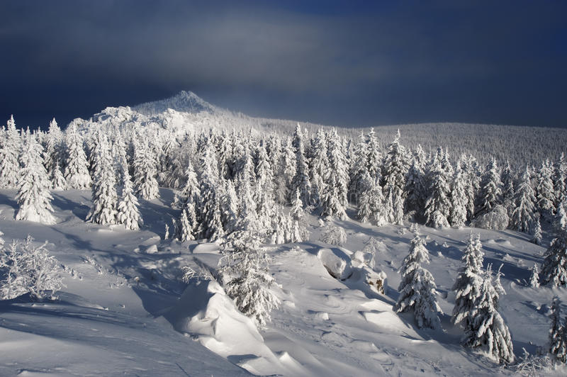 Download Winter Fir Forest In Mountains Stock Photo - Image: 12904370