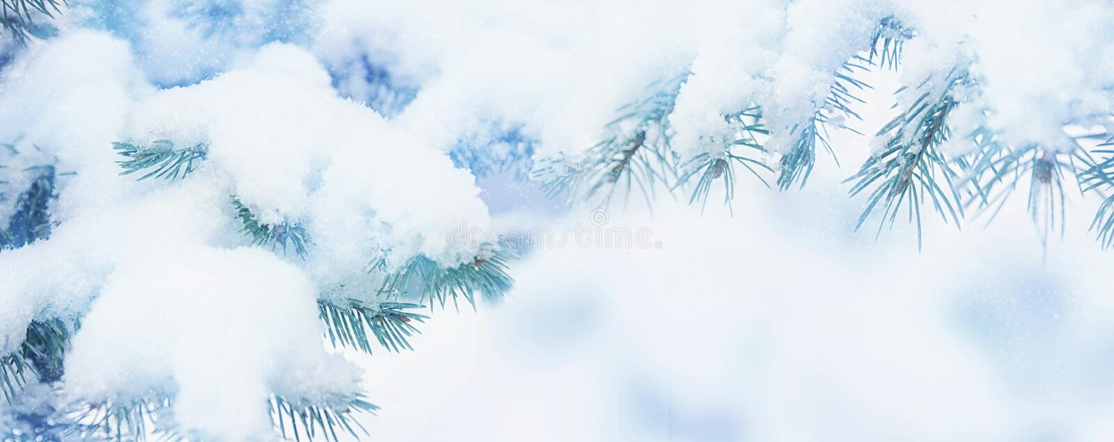 Winter fir tree holiday snow background. Blue spruce, snowflakes. Beautiful Christmas or New year blurred background stock image