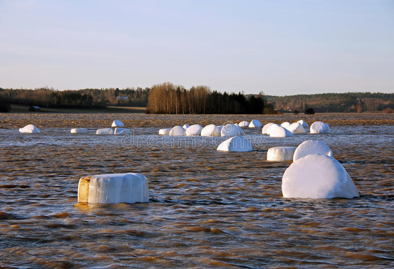 Winter flooding of river in rural Finland. Winter flooding of Muurlanjoki river into fields with damaged bales of silage in Tuohittu, Salo, Finland in december stock images