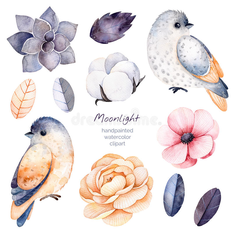 Winter floral collection with 11 watercolor elements. royalty free illustration