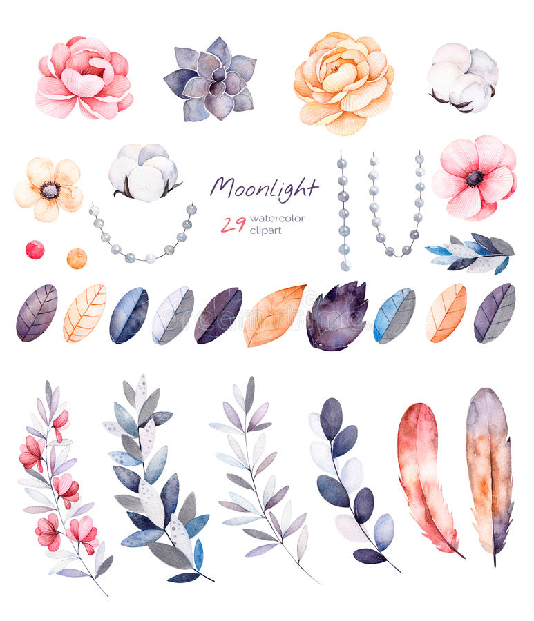 Winter floral collection with 29 watercolor elements. stock illustration