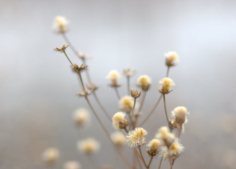 Winter flowers royalty free stock image