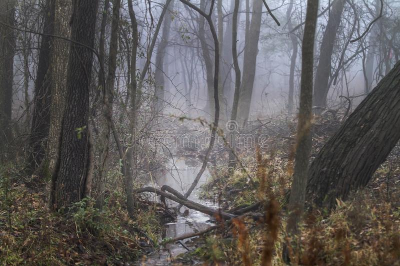 Forest in fog, tangled wilderness woodland off the beaten path stock image