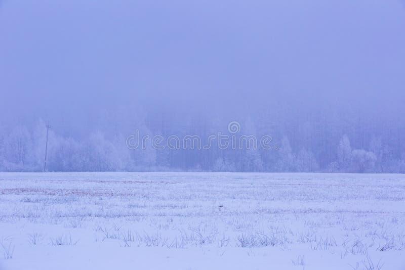 Winter foggy fields near forest landscape stock image