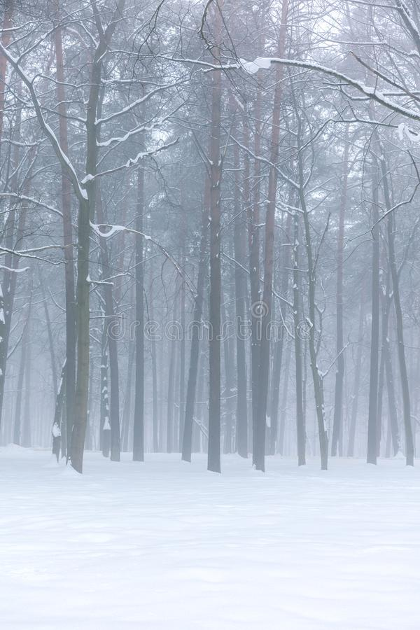 Winter foggy forest landscape royalty free stock image