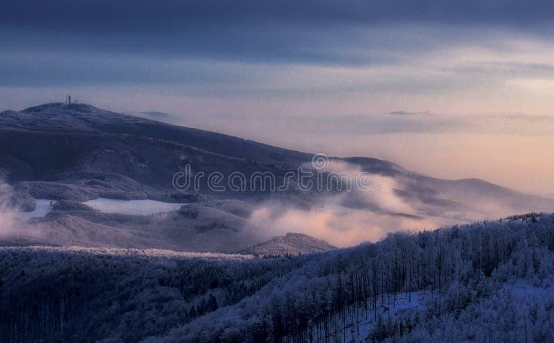 Winter foreest und Fogg stockfotos