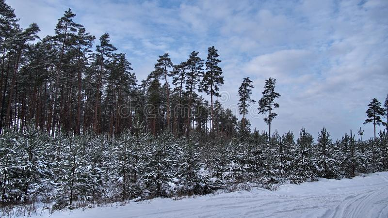 Winter fores and sky landscape stock photo