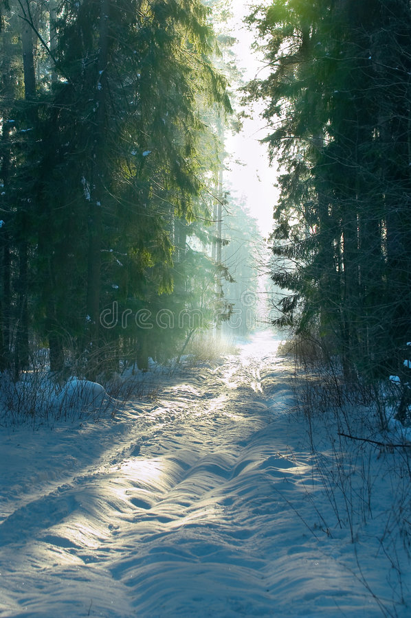 Winter forest #1 stock images