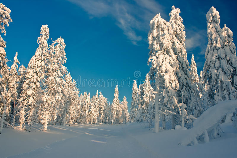 Download Winter forest stock image. Image of siberia, blue, russia - 11715283