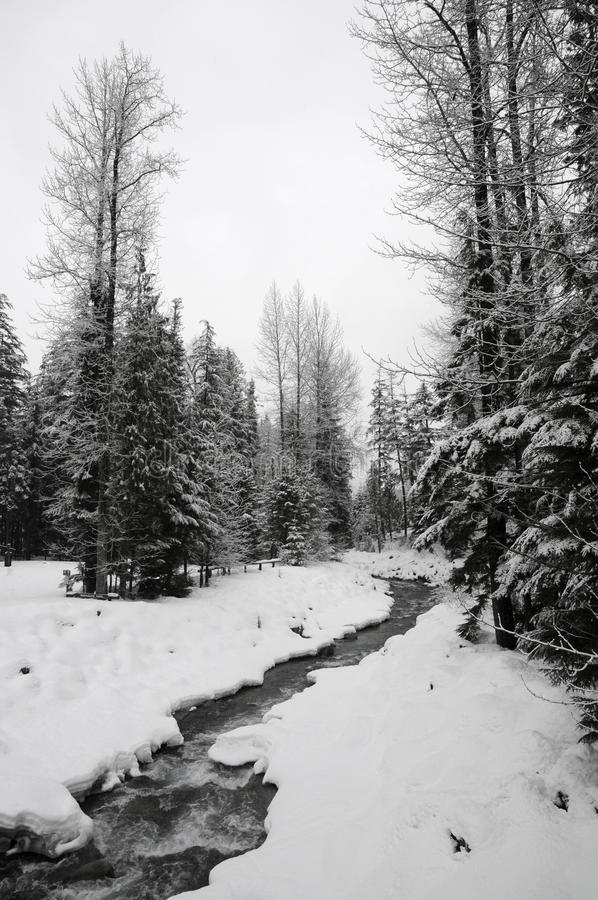 Download Winter Forest Royalty Free Stock Photography - Image: 12894727