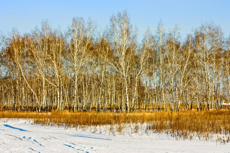 Download Winter Forest Stock Photos - Image: 13441123