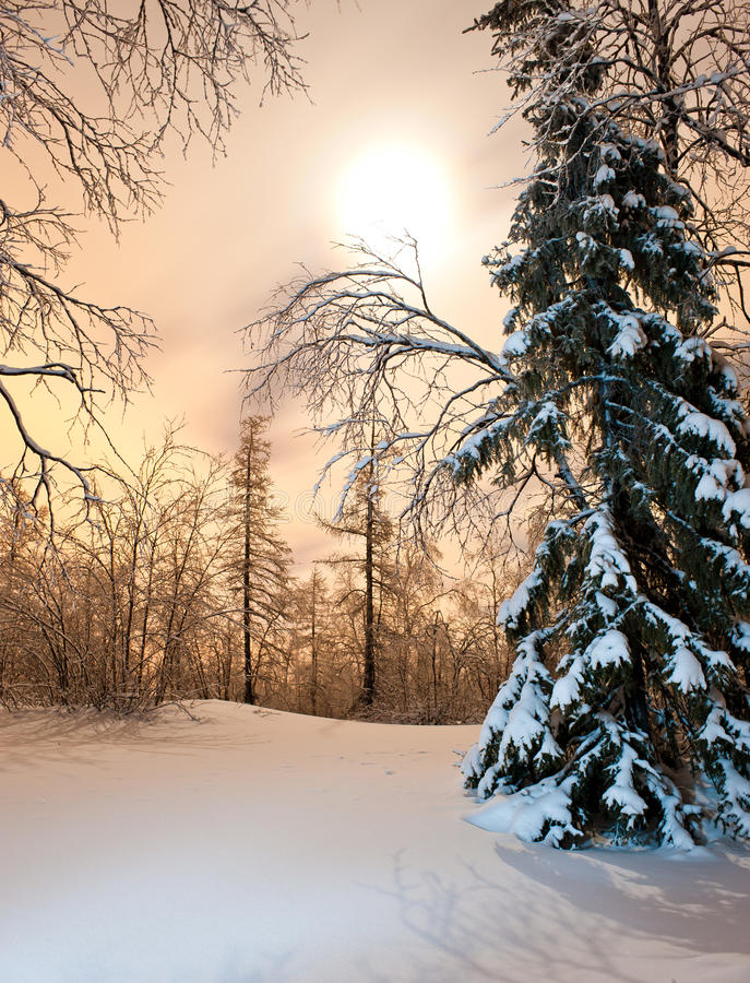Download Winter forest stock image. Image of winter, night, forest - 17140495