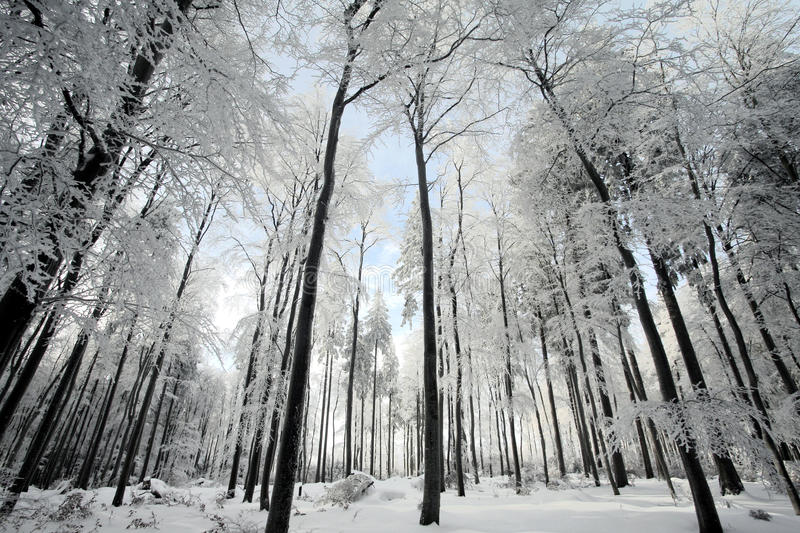 Download Winter forest stock photo. Image of mythical, landscape - 17687850