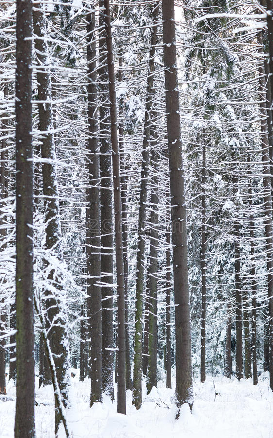 Download Winter forest stock image. Image of abstract, nature - 17765731