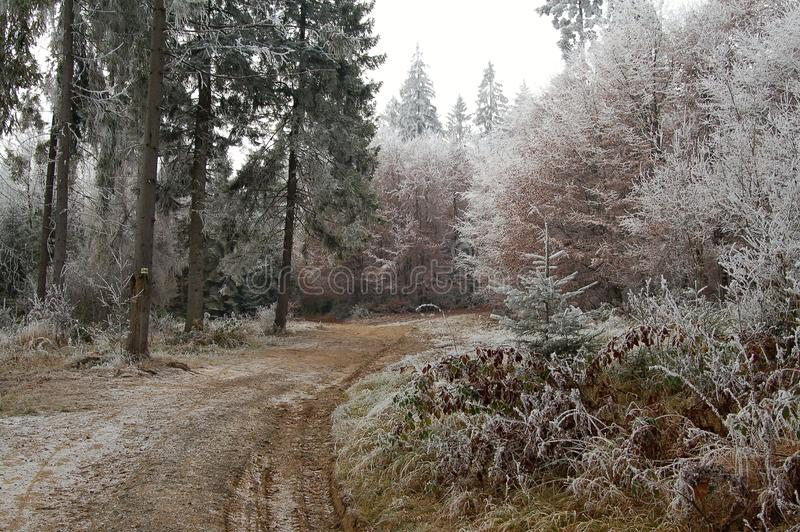 Winter forest royalty free stock photography