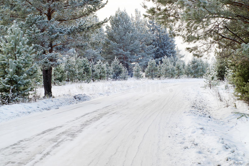 Download Winter forest stock image. Image of january, forest, color - 22734327