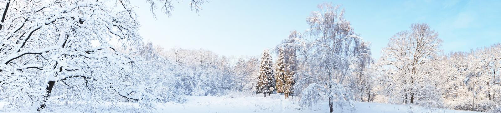 Download Winter forest stock image. Image of country, december - 23063037