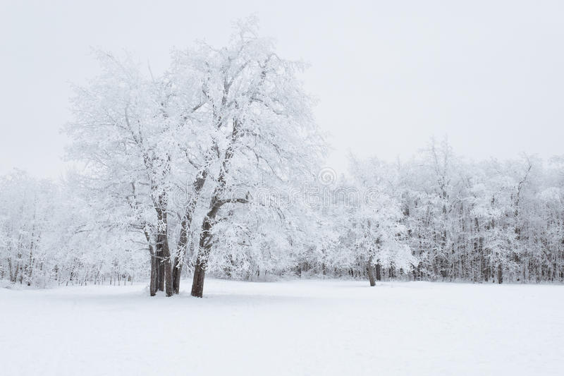 Download Winter Forest stock image. Image of covered, remote, park - 25412933