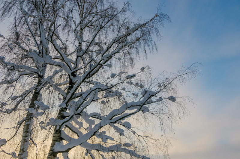 Download Winter forest stock photo. Image of trees, postcard, scenic - 27870626