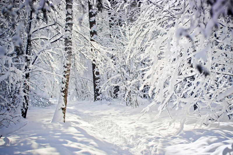 Download Winter Forest Stock Image - Image: 29165441