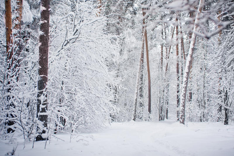Download Winter Forest Stock Photos - Image: 29165563