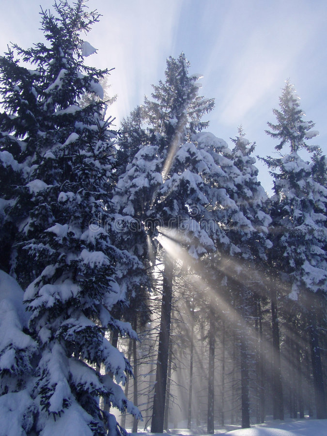 Winter forest with sunrays royalty free stock photography