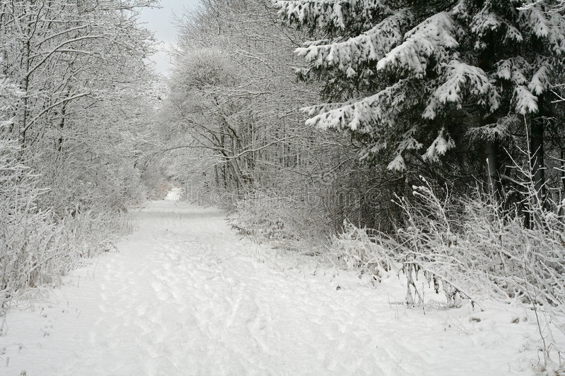 Winter forest royalty free stock images