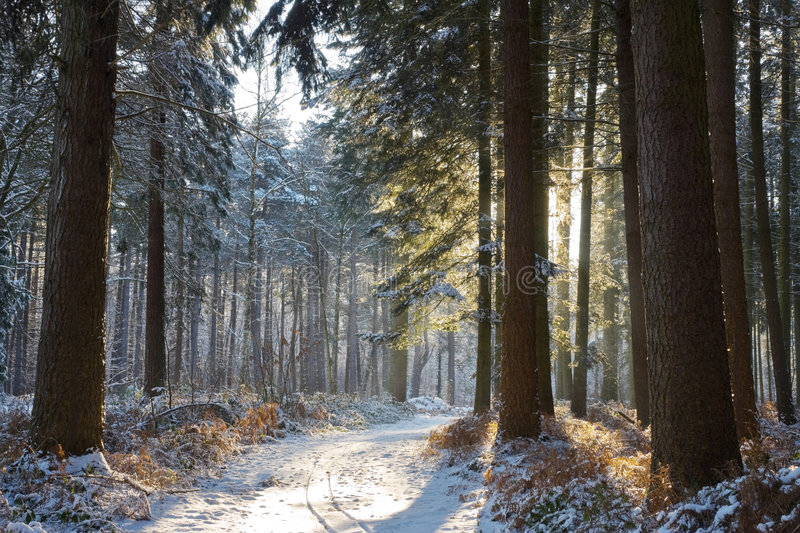 Download Winter forest stock image. Image of frost, woodland, cold - 7691937