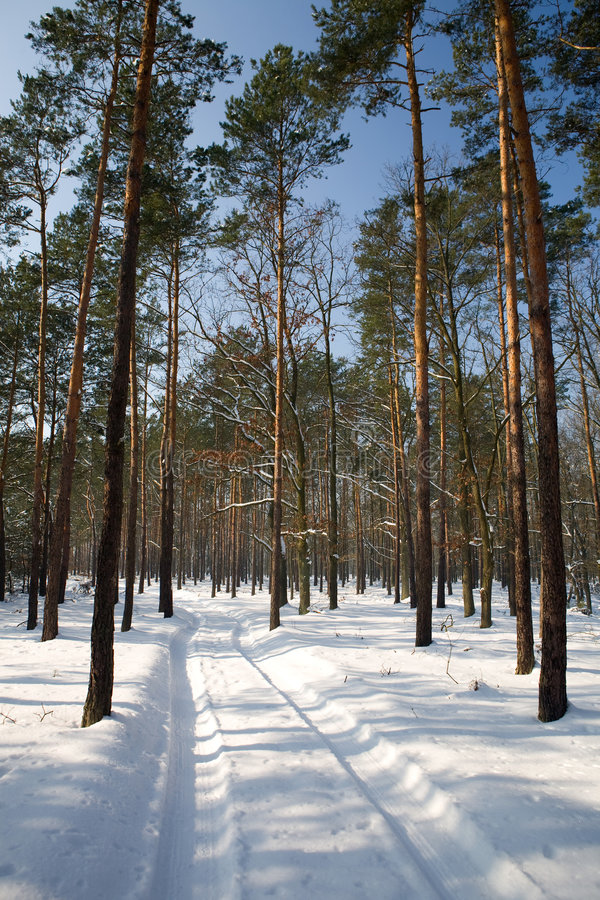 Free Winter Forest Stock Photography - 8422752