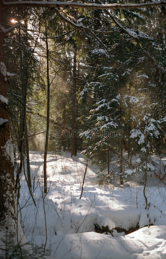 Free Winter Forest Stock Photo - 945860