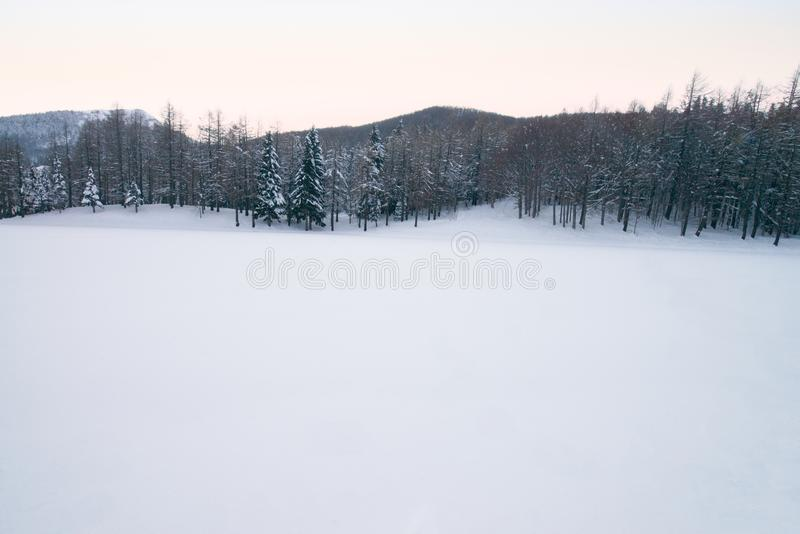 Winter forest with Beech trees covered with white snow. Winter landscape. Winter scene in mountains, Italy. Winter forest with Beech trees and Pinophyta covered royalty free stock photo
