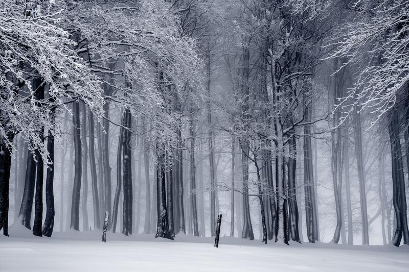 Winter Forest In Black And White Free Public Domain Cc0 Image