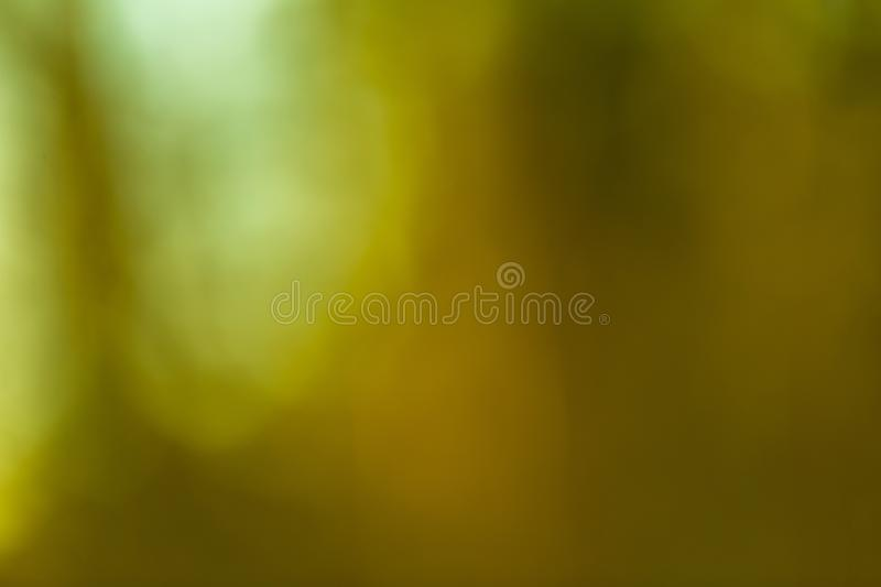 Winter forest bokeh background. Defocused abstract background royalty free stock images