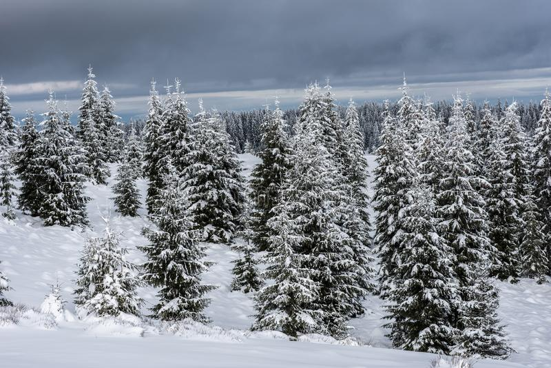 Winter forest covered with snow stock images