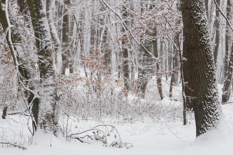 Winter in the forest with covered snow trees, abstract landscape xmas season stock images