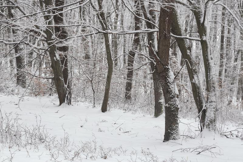 Winter in the forest with covered snow trees, abstract landscape xmas season stock image