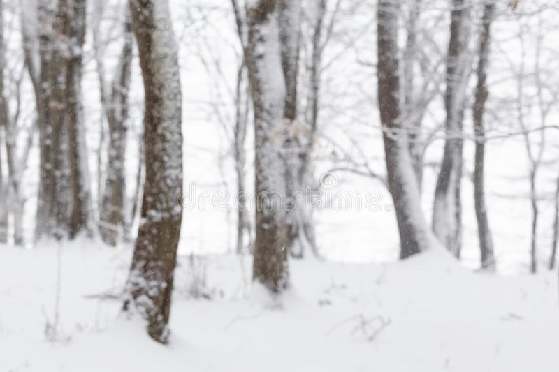 Winter in the forest with covered snow trees, abstract landscape xmas season royalty free stock image