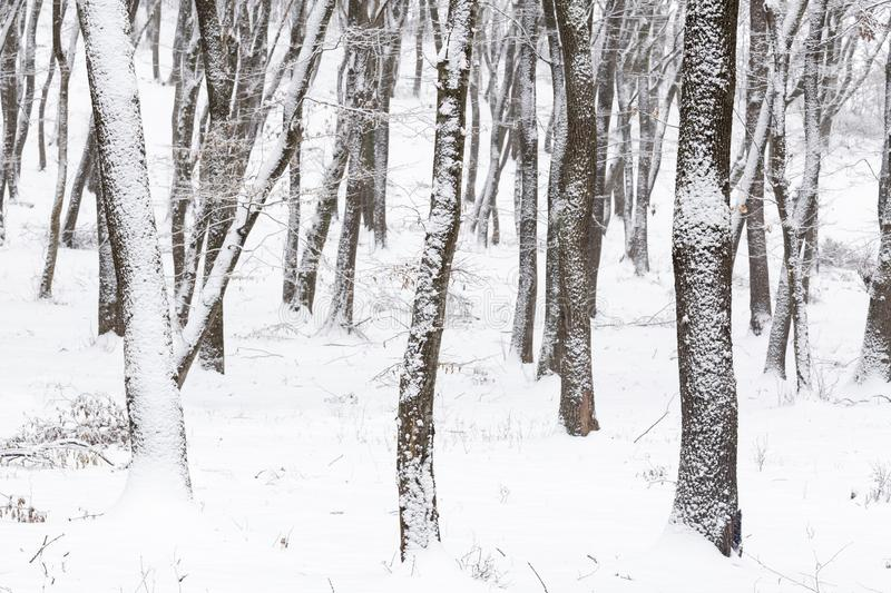 Winter in the forest with covered snow trees, abstract landscape xmas season stock photography