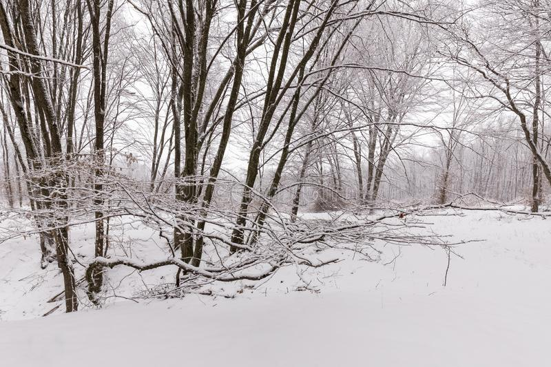 Winter in the forest with covered snow trees, abstract landscape xmas season stock photo
