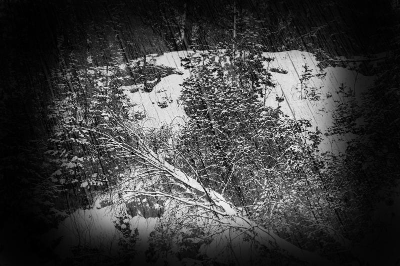 Winter in the forest. Fantasy art processing of photos with black frame for a collage stock photography