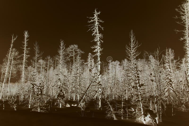 Winter forest after filling oil Aganskoye oil and gas field stock images