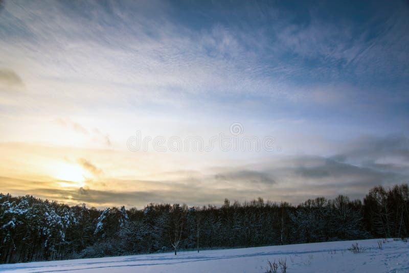 Winter forest landscape. In evening sun light stock photo