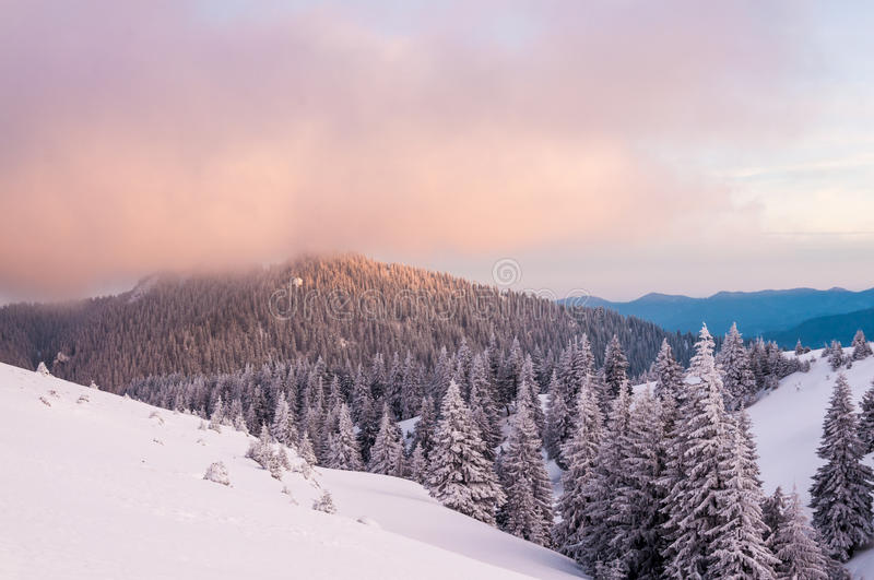 Winter forest landscape. Purple clouds over a mountain forest in winter stock photo