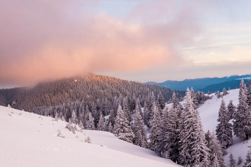 Winter forest landscape. Purple clouds over a mountain forest in winter stock image